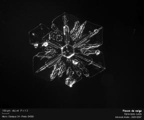 Flocon_de_neige5555.jpg