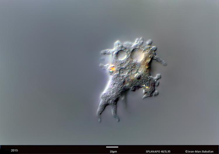 amibe 40 DIC 10-1-14 b.jpg