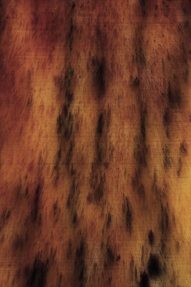 spino long 22_V9.jpg