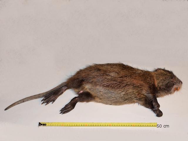 rat texte 1.jpg