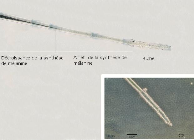 rat texte 11.jpg