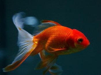 oeil poisson texte 1.jpg