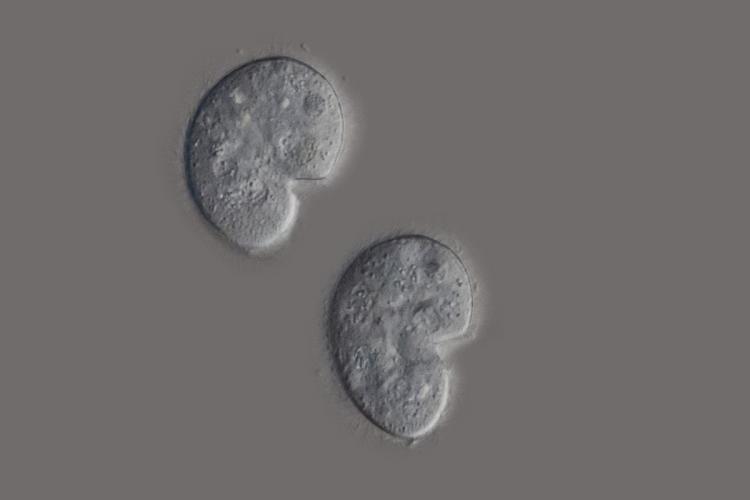 cilié nature 1_V9.jpg