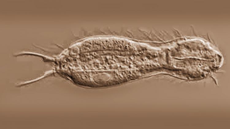 ichthydi.jpg