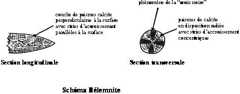 carb_mollusques_06.jpg