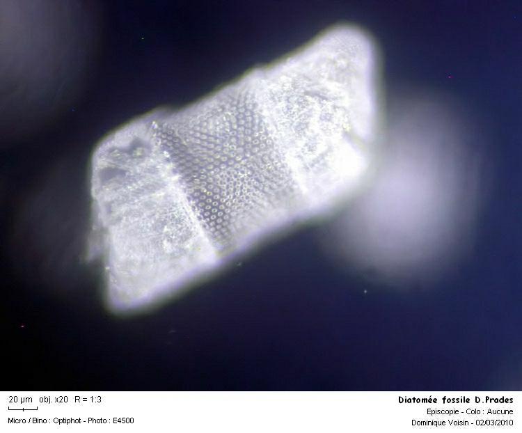 diatomee_fossile_dprades05.jpg