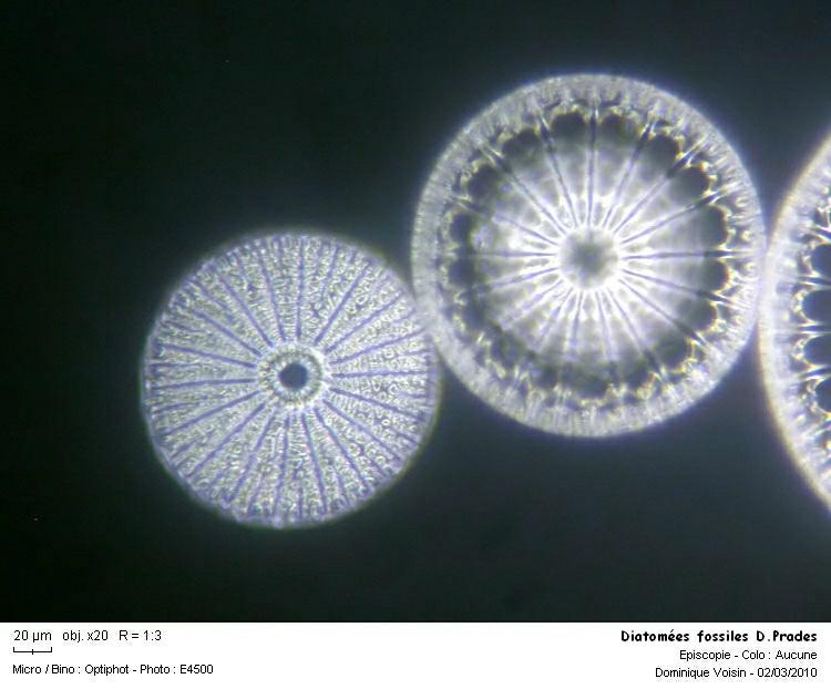 diatomee_fossile_dprades04.jpg
