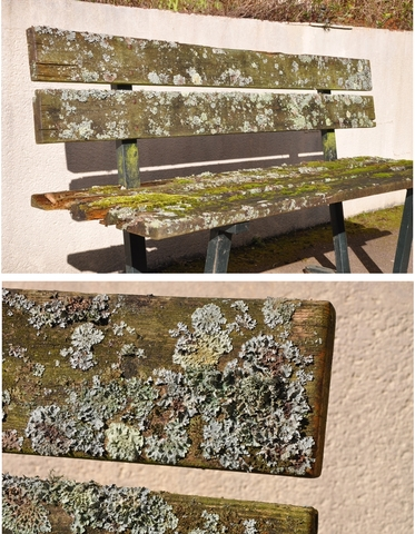 lichen texte 1.jpg
