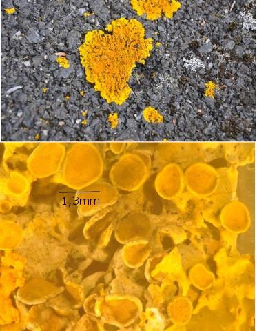 lichen texte 10.jpg