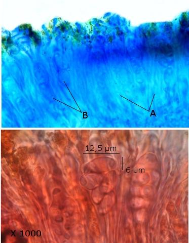 lichen texte 14.jpg