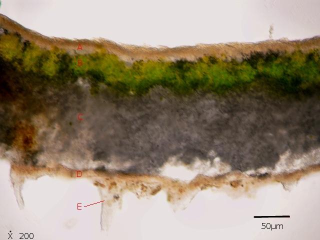 lichen texte 4.jpg