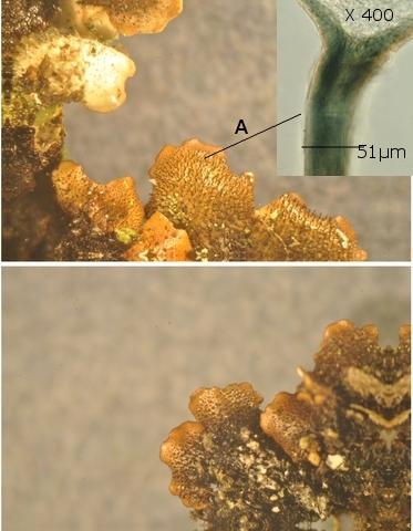 lichen texte 3.jpg