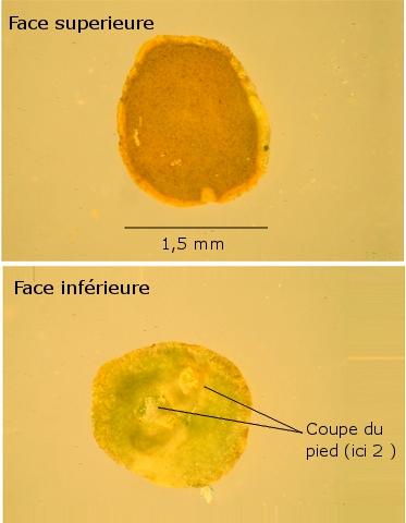 lichen texte 11.jpg