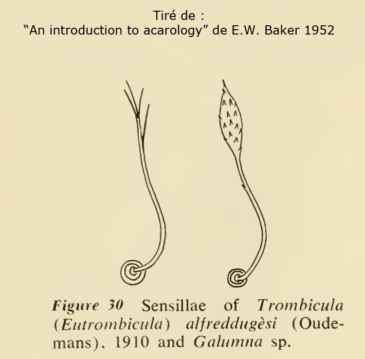 Acarology Baker-52WEB.jpg