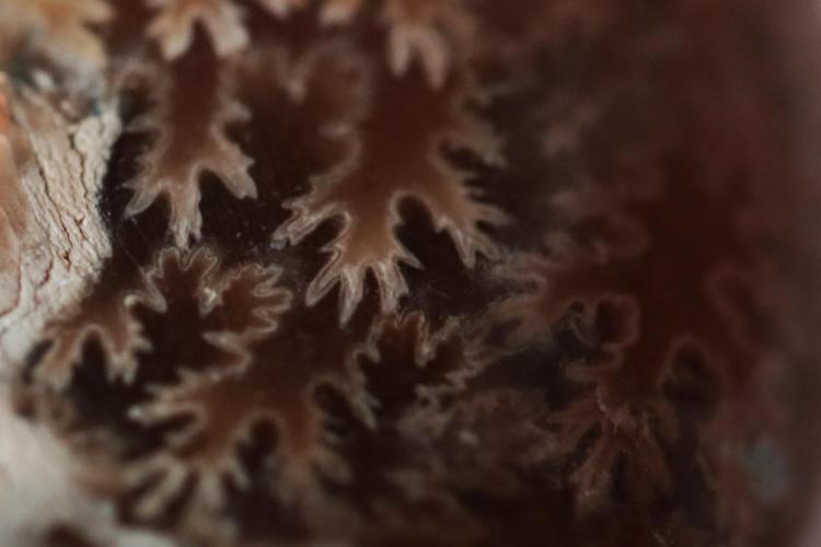 ammonite 5_V9.jpg