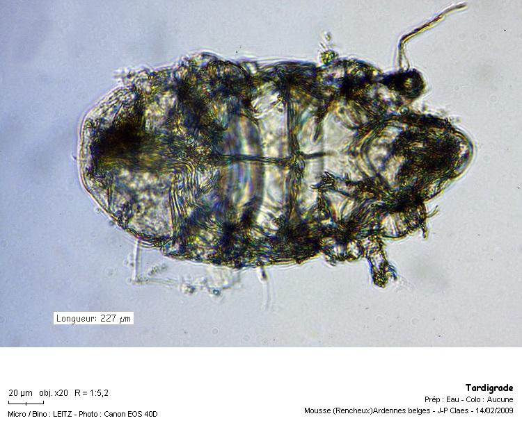 tardigrade_ref_1250.jpg