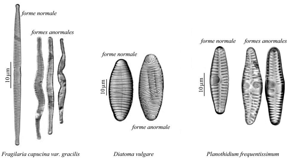 deformations.jpg