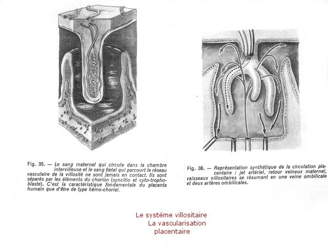 placenta texte 8.jpg