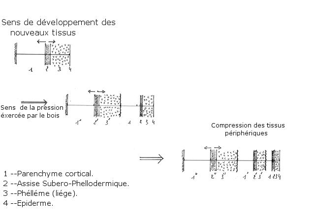 ecorce texte 3.jpg