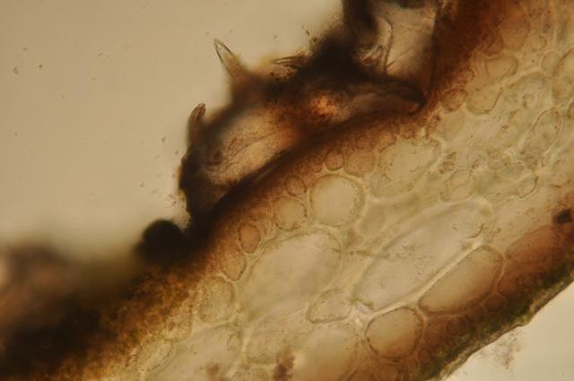 algue spore texte 6.jpg