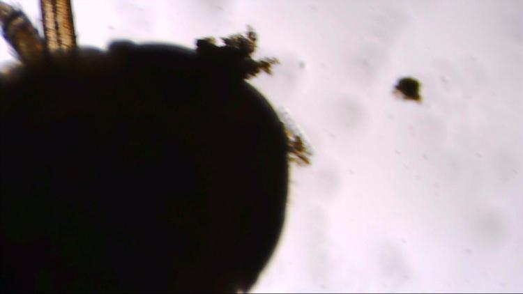 larve tète.jpg