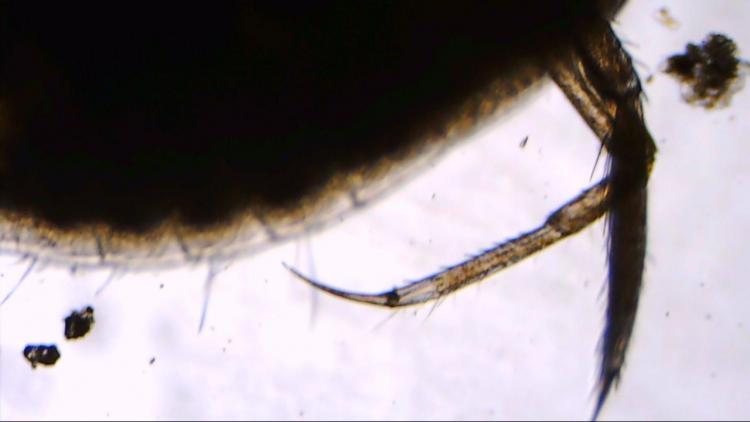 larve.jpg