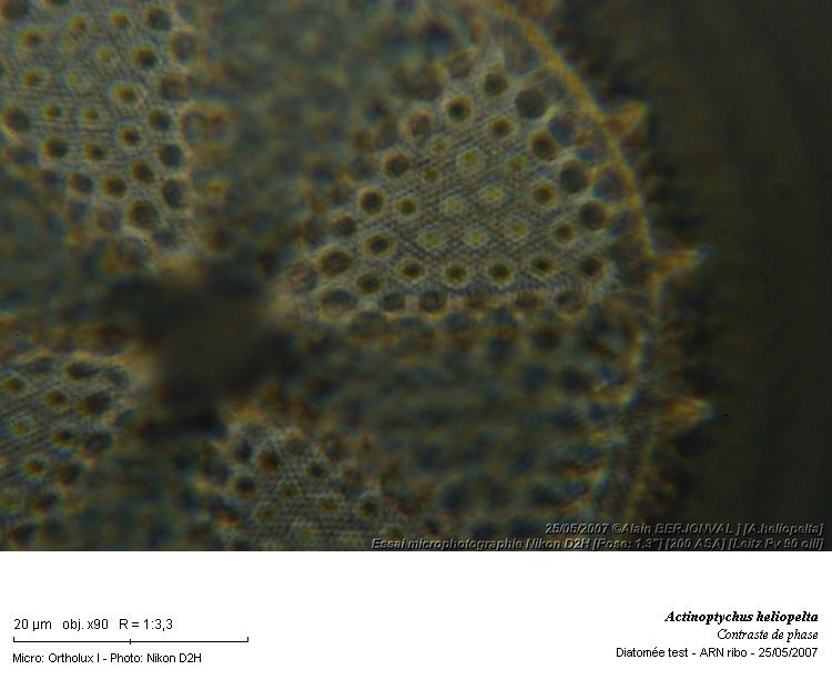 Actinoptychus_heliopelta_bis.jpg