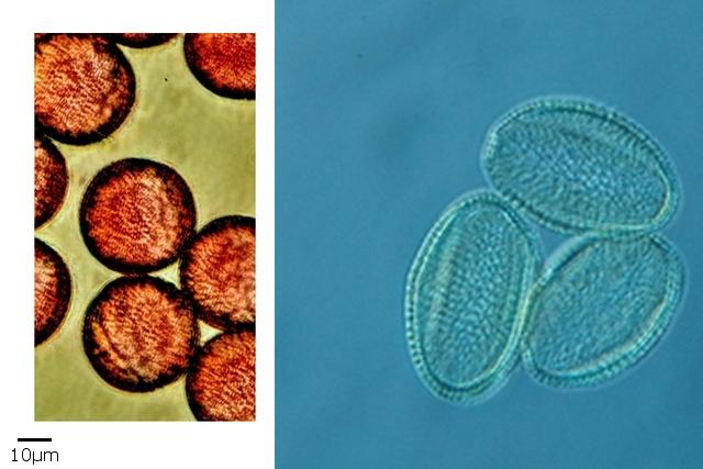 pollen texte 10.jpg