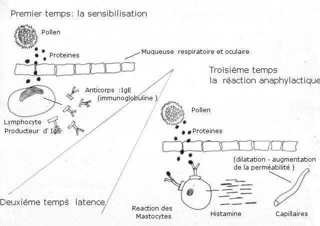 pollen texte 8.jpg
