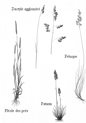 pollen texte 2.jpg