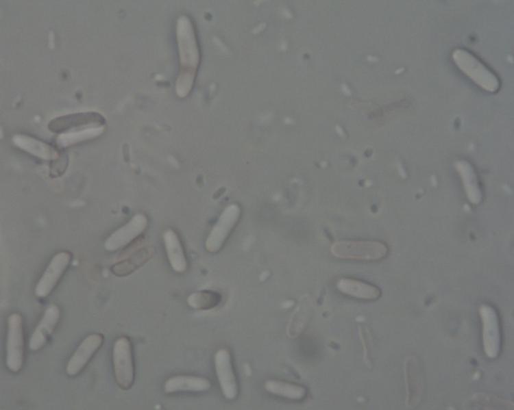Spores 1.jpg
