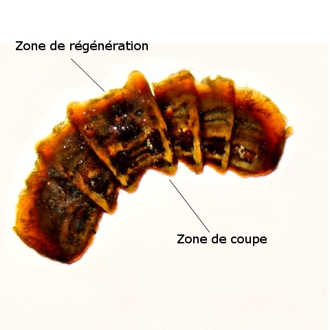 escargot  texte 2.jpg