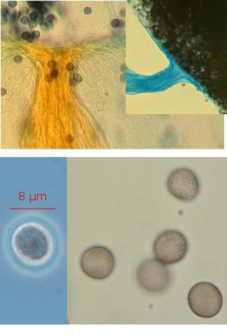 fungus texte 13.jpg