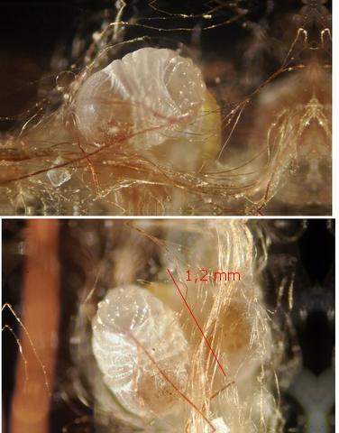fungus texte 16.jpg