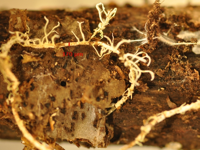 fungus macro  4.jpg