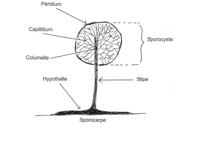 fungus texte 9.jpg