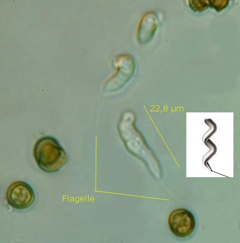 fungus texte 14.jpg
