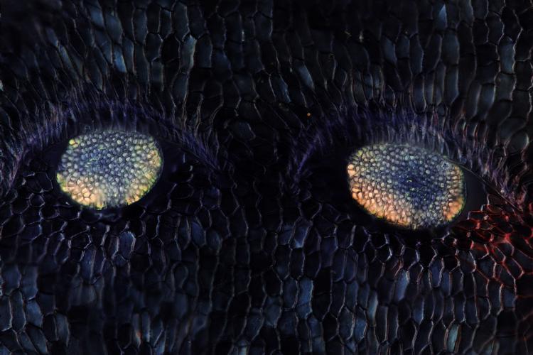 deux yeux_V9.jpg