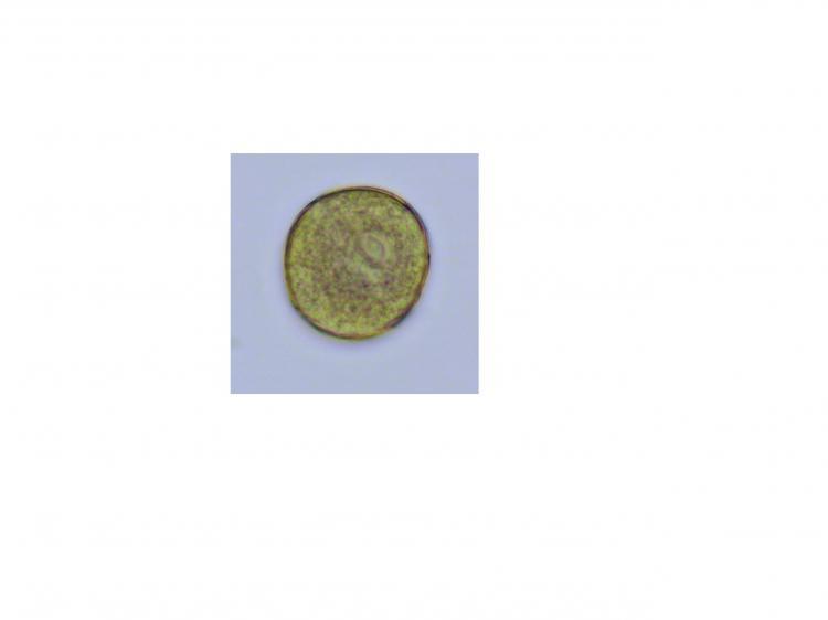 pollenpavot60-24.jpg