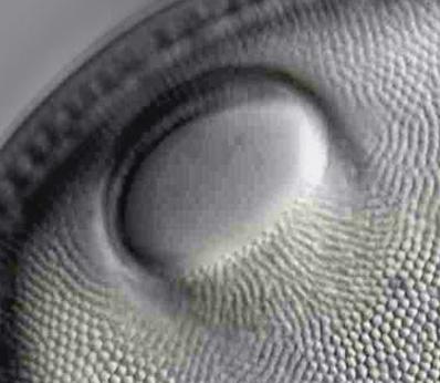 2017-05-26 21_41_15-Traitement d'images pour les diatomées. - - Logiciels et Protocoles - Mikroscopi.png