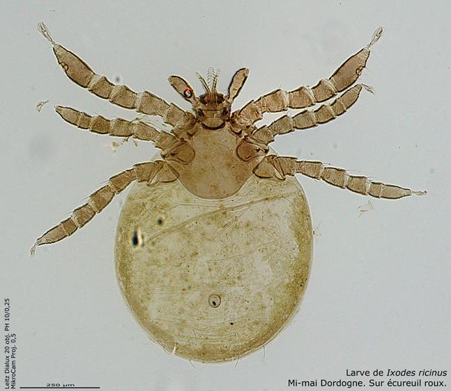1-6 stitch pano larve Web.jpg