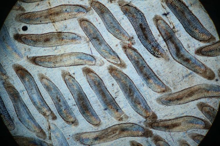 anguille 40 _V9.jpg