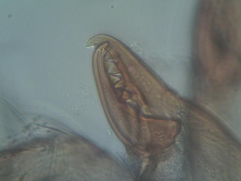 vlc-acarien-0610-00261.jpg