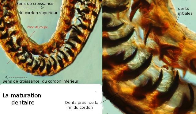 patelle texte 9 .jpg