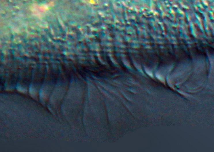 image echelle 1-1 flou-bruit.jpg