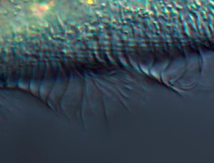 image echelle 1-1 pinc mél-neat-topaz.jpg