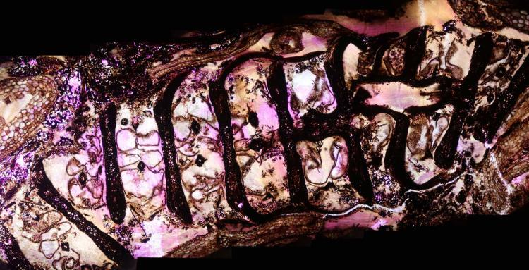 carbonifère 20_V9.jpg