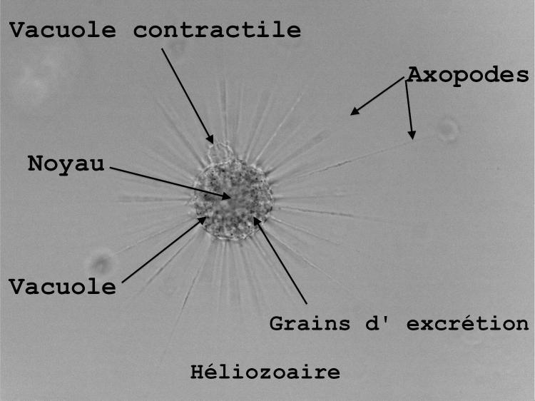 heliolrgbNBannoté.jpg