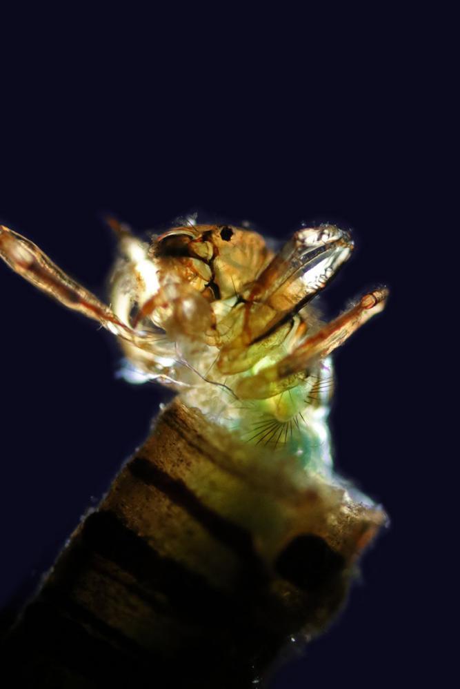 larve 1_V9.jpg