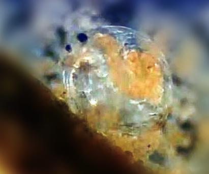 cladox.JPG